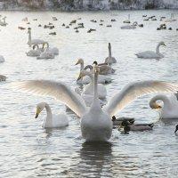 Величественная птица :: samplephoto _