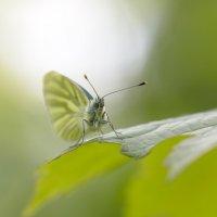 в зеленом мире :: Владимир Князев