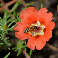 Пчелка :: Петр Заровнев