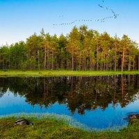 Болота Эстонии :: Alex Sanin