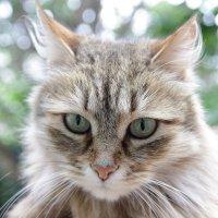 Вы действительно не любите кошек или не умеете их готовить? :: Иван Дмитриев