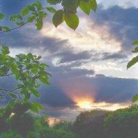 Закат и молодая листва :: Алексей Ник