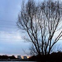 дерево :: Татьяна