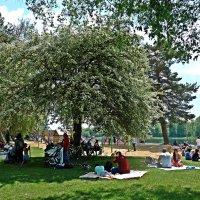 На озере. После дождливых дней....все рады солнышку!!! :: Galina Dzubina