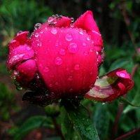 Умытые дождем :: анатолий томас
