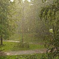 Майский дождь :: Наталия П