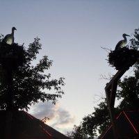 Вечерело в парке городском. :: Ольга Кривых