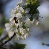 Весна :: Татьяна Пилипушко