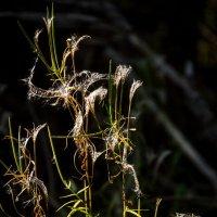 Травы. Осенняя примерка :: Алексей (АСкет) Степанов