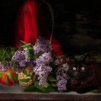 Котик в сирени :: Виктория Колпакова