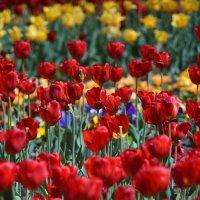 Цветы летом :: Олег Чернышев
