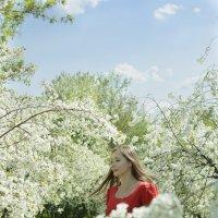 Вишневый сад :: Анна Городничева