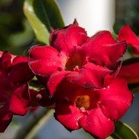 Цветы на Тенерифе :: Witalij Loewin