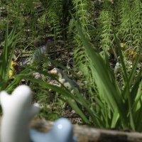 и тут им открылся вид на пастбище невероятных животных :: Инна