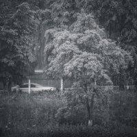 О дожде... :: Сергей Офицер