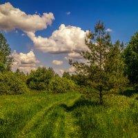 Майский полдень :: Андрей Дворников