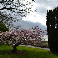 Весна цветёт. :: zoja