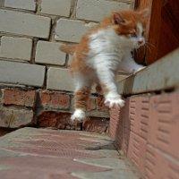... из жизни летающих котов... :: BoykoOD