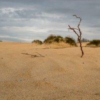 золотые  дюны :: Svetlana AS
