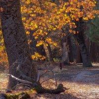 Под шелест листьев :: svabboy photo