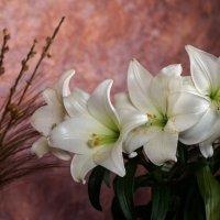 Белые лилии :: Alex Molodetsky