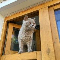 Сидит кошка на окошке... :: Татьяна Калинкина