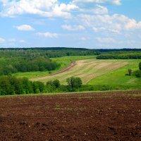 Леса, поля, дороги.. :: Андрей Заломленков