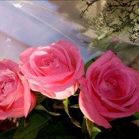 Розы :: Татьяна Пальчикова