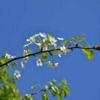 Три цвета весны :: Маргарита Королева