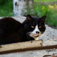 Взгляд ученого кота... :: Арина