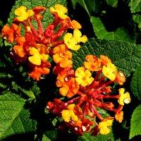 Неведомые цветы после дождя :: Асылбек Айманов