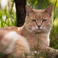 кошка :: Роман Маканчук