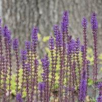 Придорожные цветы :: Андрей Майоров