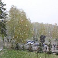 Снегопад 8 мая :: Наталья Золотых-Сибирская