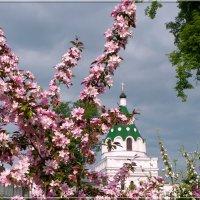 Гимн весны :: Святец Вячеслав