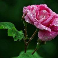 Весны этюды. В Гадюкино дожди... :: Александр Резуненко