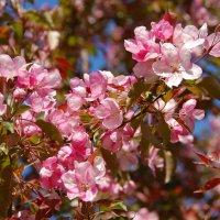 Яблоневый сад в Коломенском :: НАТАЛИ natali-t8
