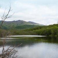 Озеро :: Наталья Литвинчук