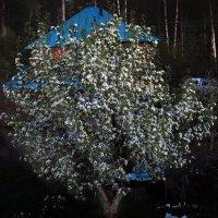Пора цветения :: Борис Гуревич