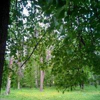 майский парк :: Nadezhda