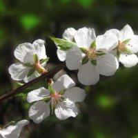 Встречая весну :: Тамрико Дат