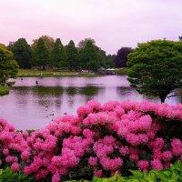 Розовая нежность :: Nina Yudicheva