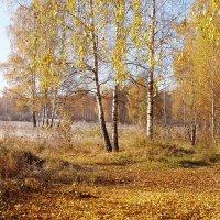 осень :: Анатолий Аверкин