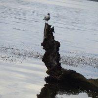 Памятник неизвестному пеньку :: Алекс Аро Аро