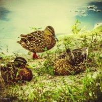 Отдых на озере :: Виктория Бессонова