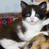 Наш маленький котёнок Феликс во всей красе (8 фото)! :: Наталья (ShadeNataly) Мельник