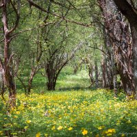 крымский лес :: Sergey Bagach