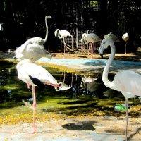 Фламинго :: Герович Лилия