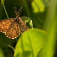 Бабочка :: Руслан