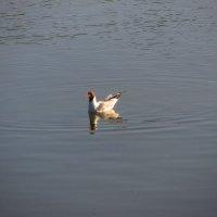 Одиночное плавание :: Андрей Лукьянов